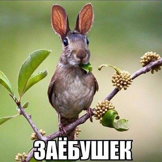http://s8.uploads.ru/1EY4a.jpg