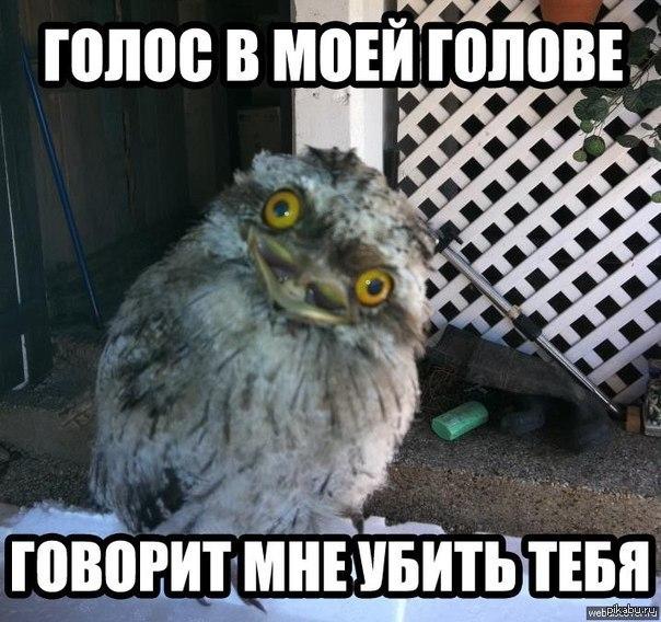 http://s8.uploads.ru/9gbYi.jpg