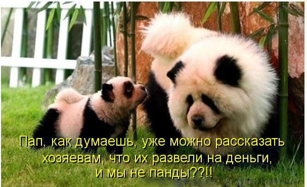http://s8.uploads.ru/Ajis9.jpg