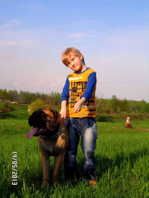 """Фотографии """"Бульмастиф и дети"""" - Страница 3 CnYmo"""