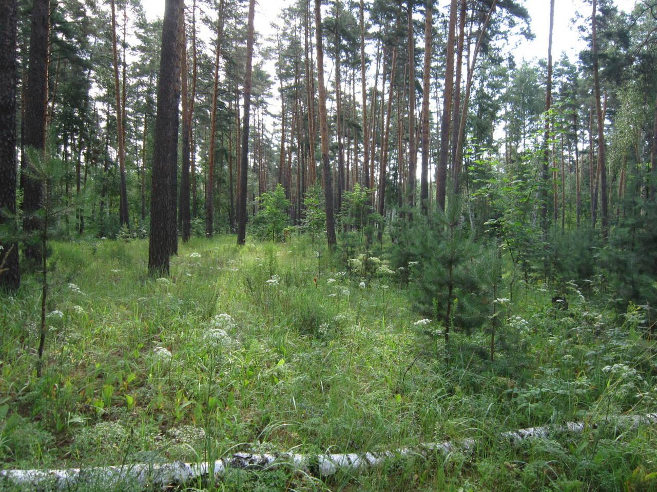 http://s8.uploads.ru/DIt4H.jpg