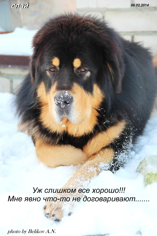 http://s8.uploads.ru/KDH5d.jpg