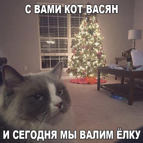 http://s8.uploads.ru/MGi8s.jpg