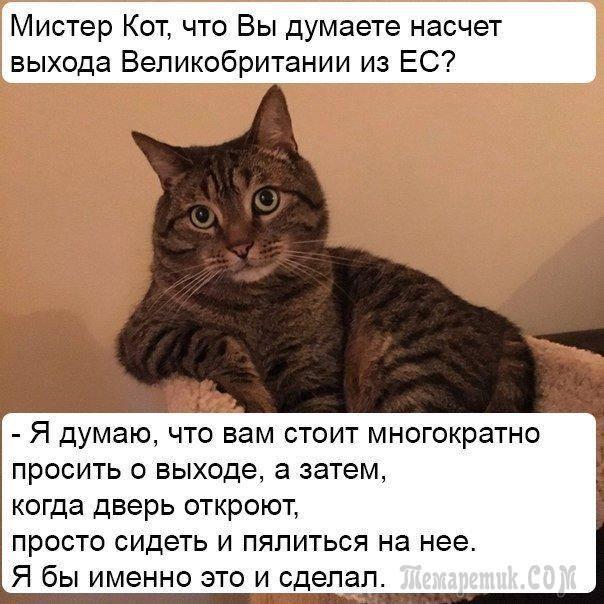 http://s8.uploads.ru/MVek0.jpg
