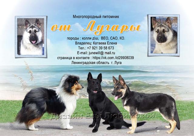 http://s8.uploads.ru/NSP3M.png