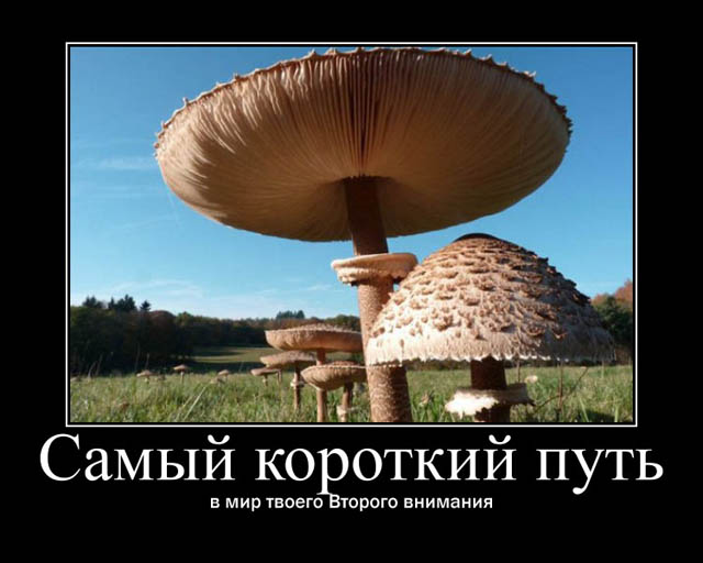 http://s8.uploads.ru/QYDGn.jpg