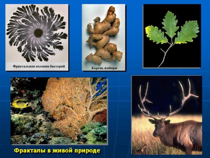 http://s8.uploads.ru/Va8pM.jpg