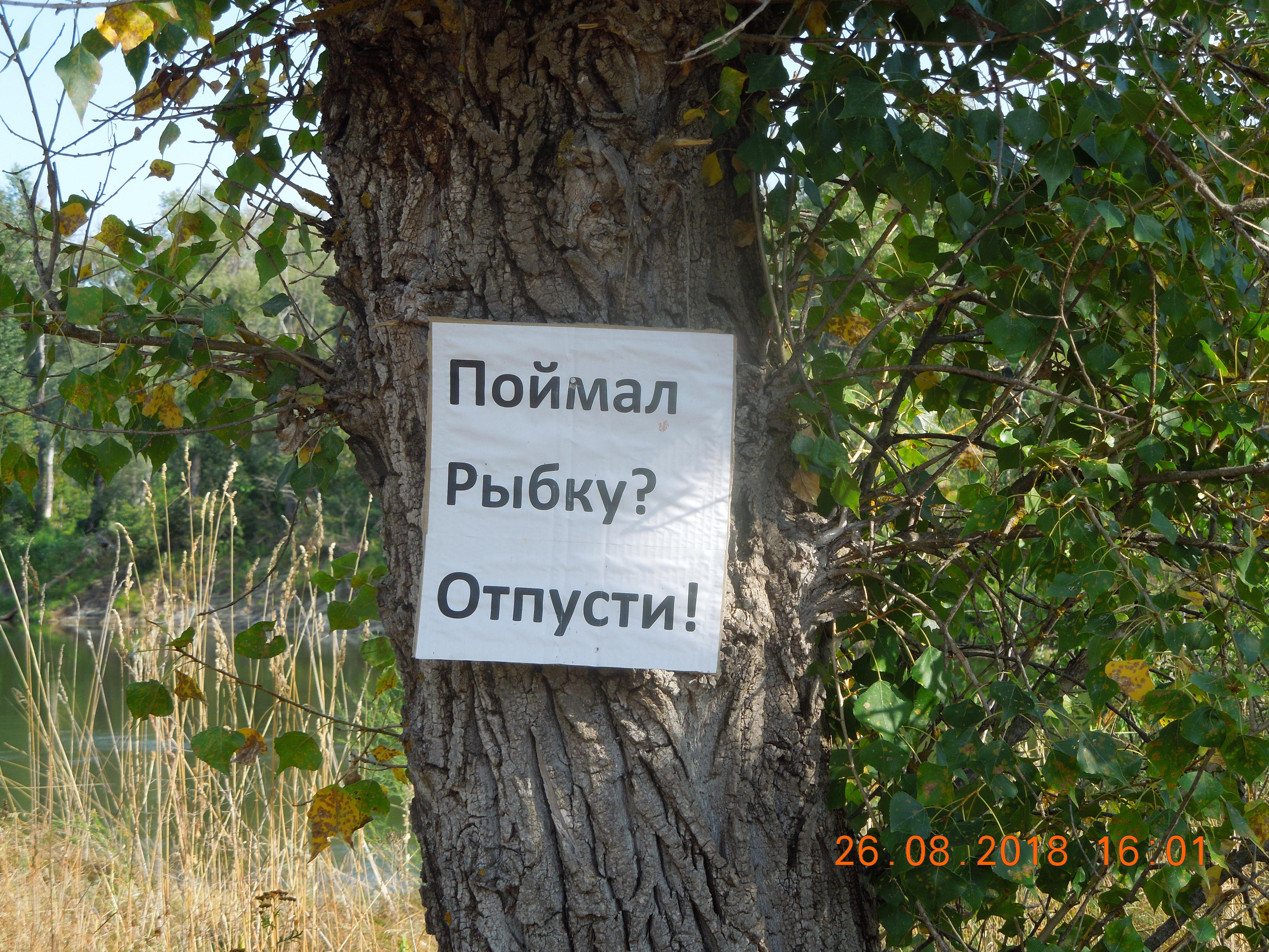 http://s8.uploads.ru/d2eo9.jpg