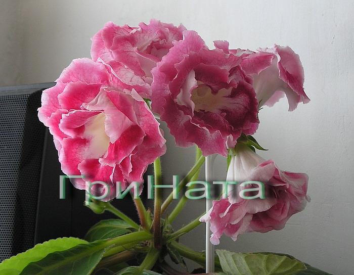 http://s8.uploads.ru/dWf9q.jpg