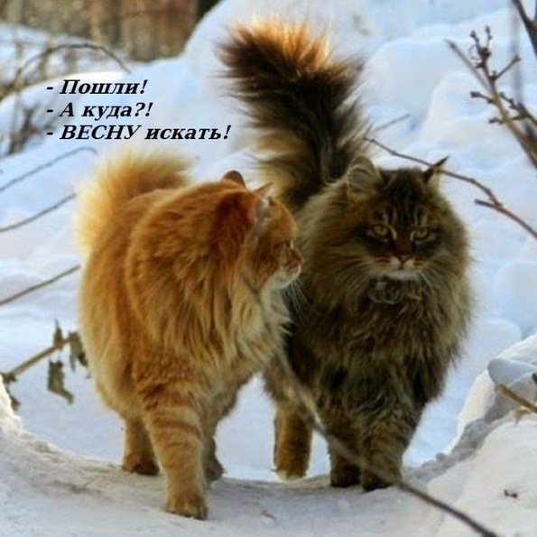 http://s8.uploads.ru/fTcKH.jpg