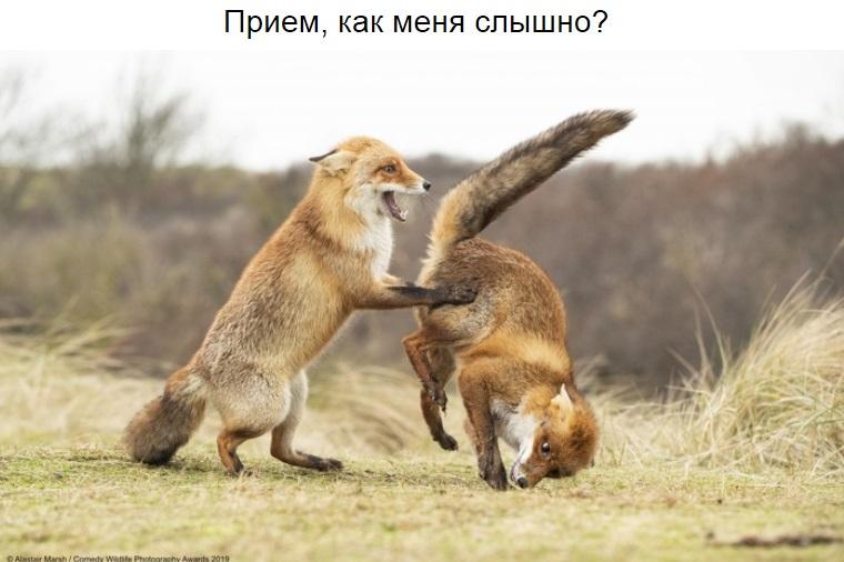 http://s8.uploads.ru/fc90U.jpg