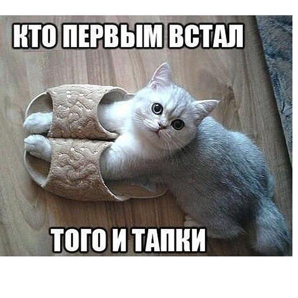 http://s8.uploads.ru/gBdz4.png