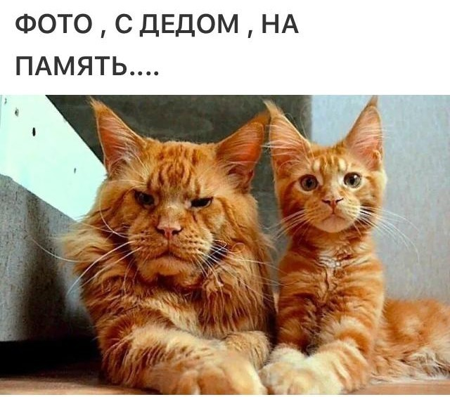 http://s8.uploads.ru/gtkdB.jpg