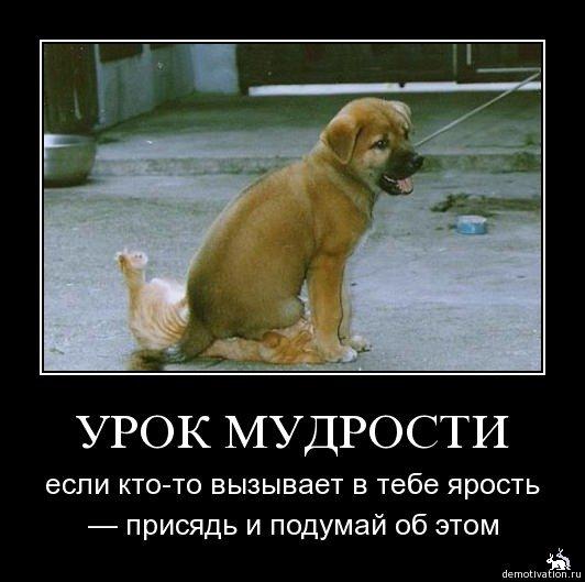 http://s8.uploads.ru/mHund.jpg