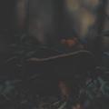 http://s8.uploads.ru/otbK8.png