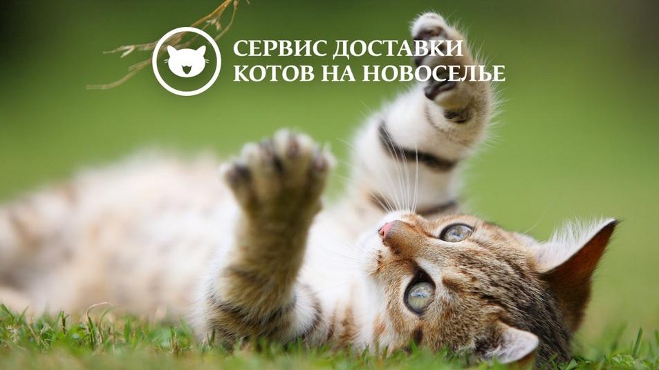 http://s8.uploads.ru/rbyV5.jpg