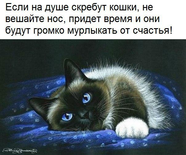 http://s8.uploads.ru/sRutX.jpg