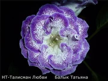 http://s8.uploads.ru/t/0MGpP.jpg