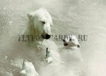 http://s8.uploads.ru/t/0OlXB.jpg