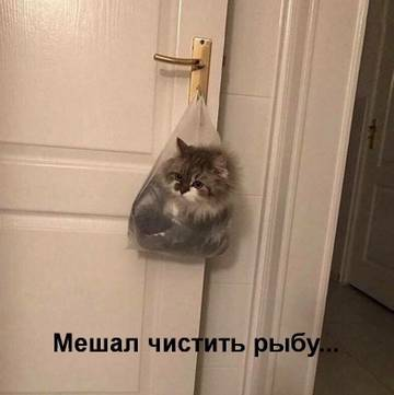 http://s8.uploads.ru/t/1IWMJ.jpg