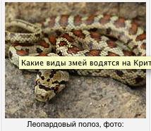 http://s8.uploads.ru/t/2K5fF.png