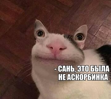 http://s8.uploads.ru/t/36udn.jpg