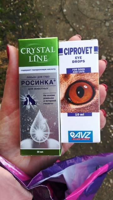 http://s8.uploads.ru/t/3ZKsP.jpg