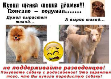 http://s8.uploads.ru/t/3tLVJ.jpg