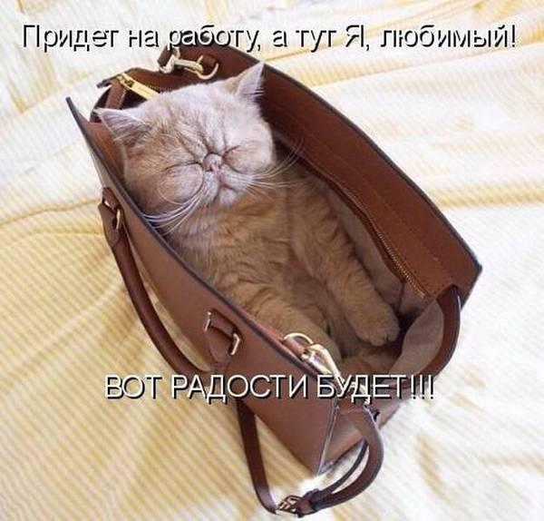 http://s8.uploads.ru/t/4Mve2.jpg