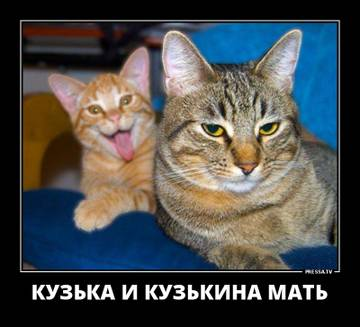 http://s8.uploads.ru/t/4Nenv.jpg