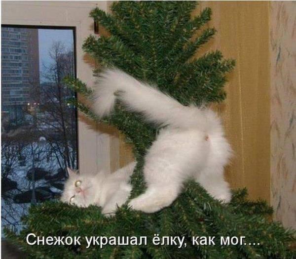 http://s8.uploads.ru/t/4dmrv.jpg