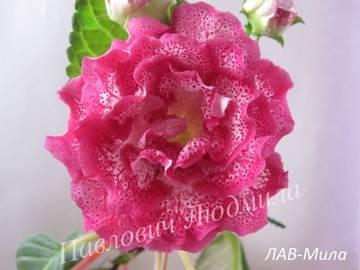 http://s8.uploads.ru/t/64AI9.jpg