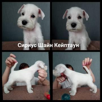 http://s8.uploads.ru/t/7NyGz.jpg
