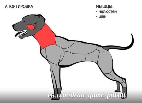 http://s8.uploads.ru/t/AG429.jpg