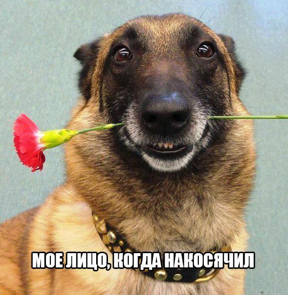 http://s8.uploads.ru/t/DcjVh.jpg