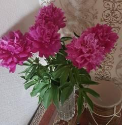 http://s8.uploads.ru/t/EaZwL.jpg