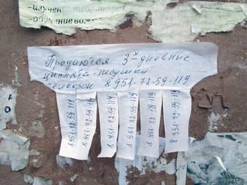 http://s8.uploads.ru/t/El8Mq.jpg