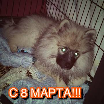 http://s8.uploads.ru/t/FIifa.jpg