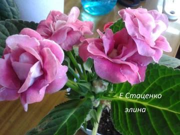 http://s8.uploads.ru/t/GIxwM.jpg