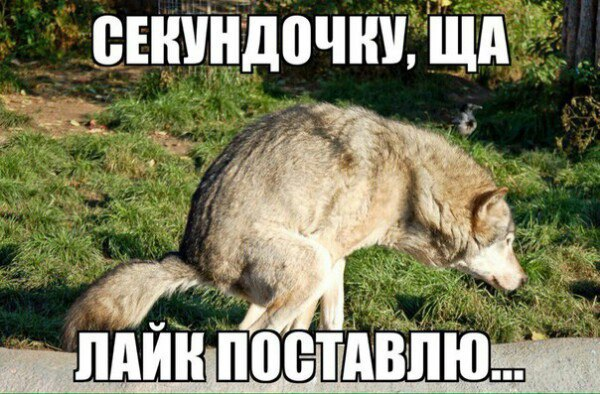 http://s8.uploads.ru/t/IUr2i.jpg