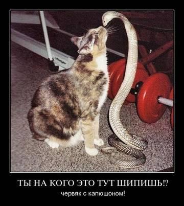 http://s8.uploads.ru/t/Iysrg.jpg