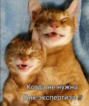 http://s8.uploads.ru/t/Jbr8Q.jpg