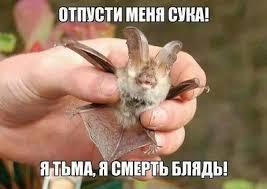 http://s8.uploads.ru/t/KRIuM.jpg