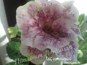 http://s8.uploads.ru/t/MZSLG.jpg