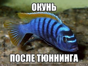 http://s8.uploads.ru/t/MrnG8.jpg