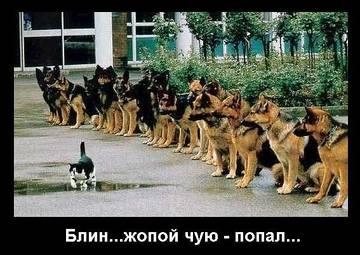 http://s8.uploads.ru/t/N3TGh.jpg