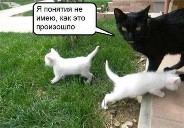 http://s8.uploads.ru/t/QdcEz.jpg