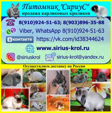http://s8.uploads.ru/t/QhK7z.jpg