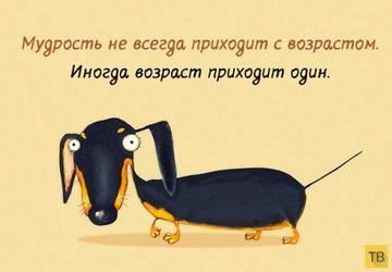 http://s8.uploads.ru/t/RAkz8.jpg