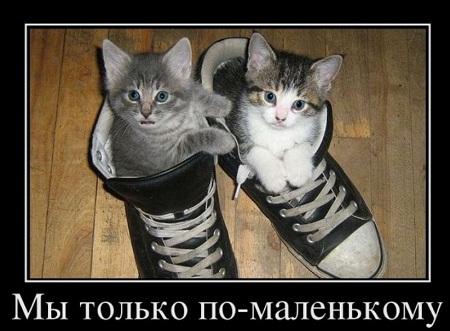 http://s8.uploads.ru/t/Rp5Zz.jpg
